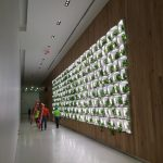 Living Wall Supported by Unistrut Modular Racking